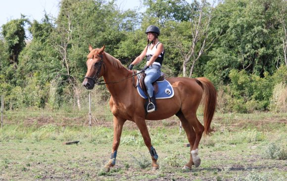 Horseback Riding in Nature Is Offered by Vaya Ecopark