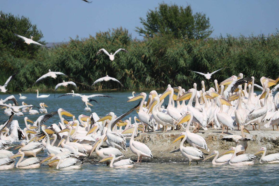 """Фондация Виа Понтика представи Екопарк за биоразнообразие и алтернативен туризъм """"Вая"""" на форум организиран от Федерация Зелени Балкани"""