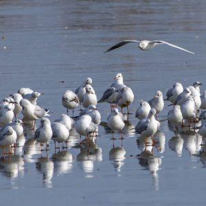 1 април – Международен ден на птиците